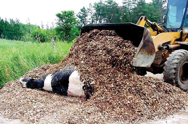 When composting, cover the carcass