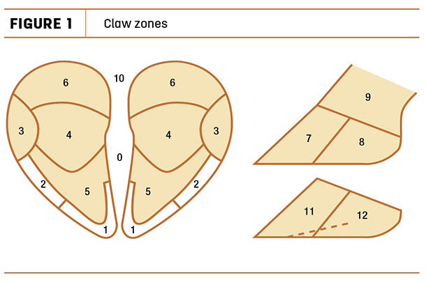 Claw zones