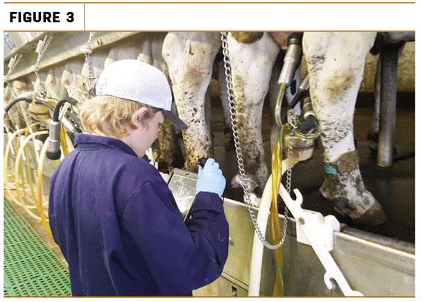 Parlour or pen walks checking for ulcerated DD lesions