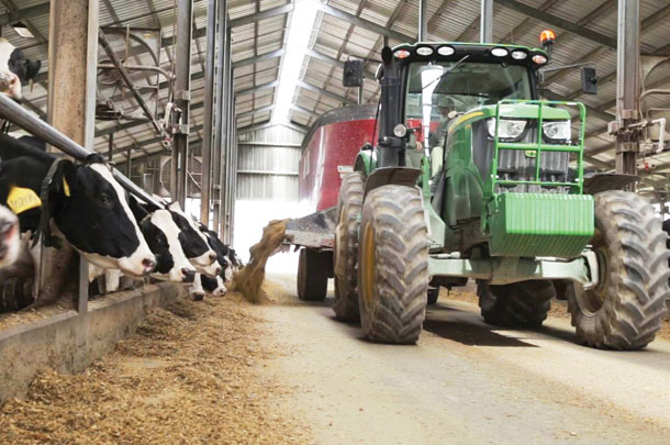 Feeding the dairy herd
