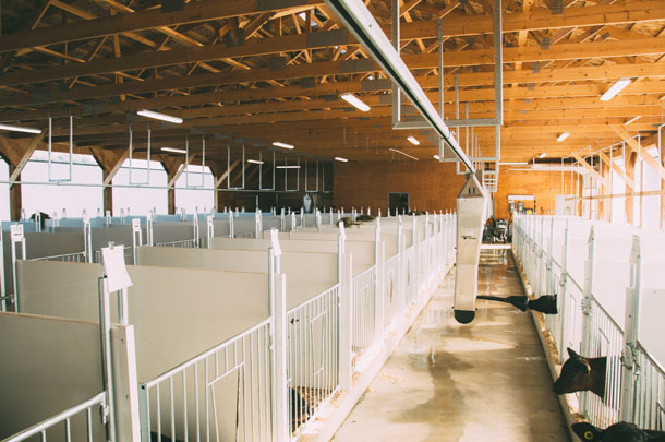 calf rail feeding system