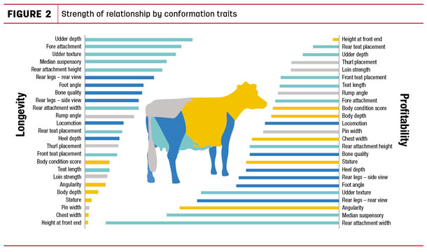 Strength of relationship by conformation traits