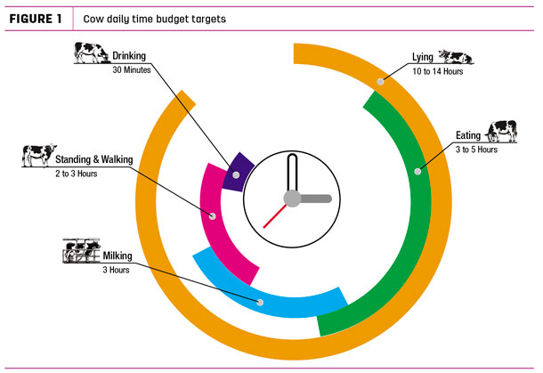 Cow daily time budget targets