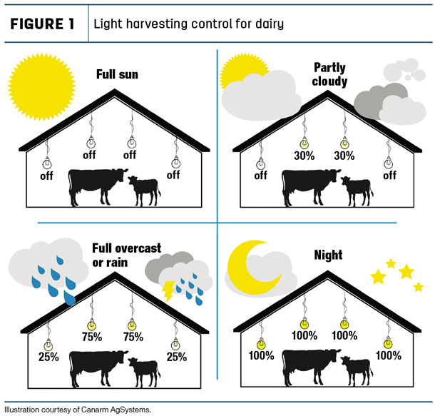 Light harvesting control for dairy