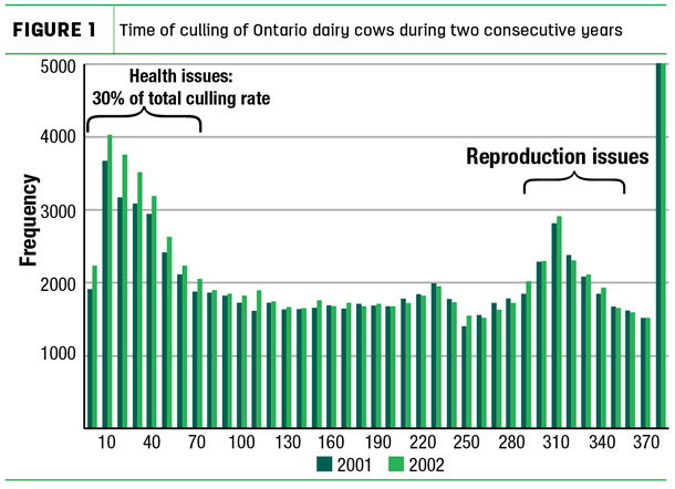 Time of culling of Ontario dairy cows during two consecutive years
