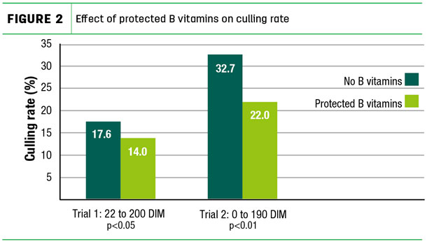 Effect of protected B vitamins on culling rate