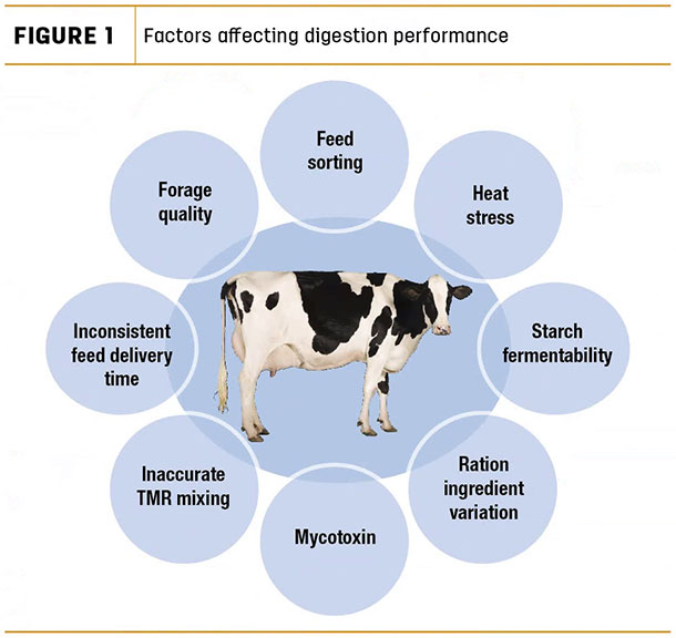 Factors affecting digestion performance