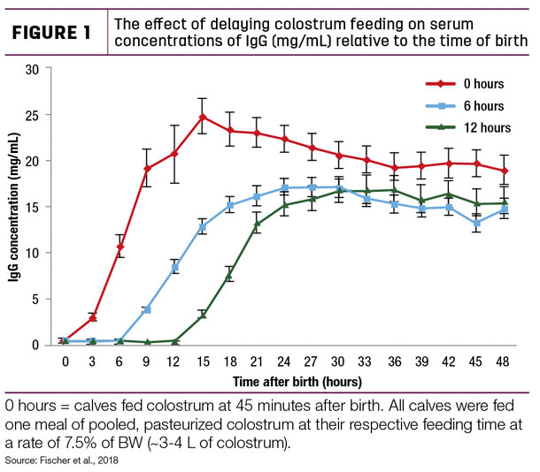 The effect of delaying colostrum feeding on serum concentrations of IgG (mg/mL) relative to the time of birth