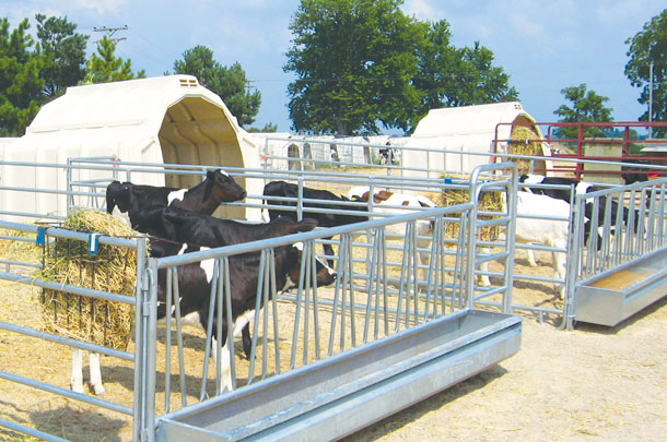 Ensure adequate bunk space so calves aren't competing for feed.
