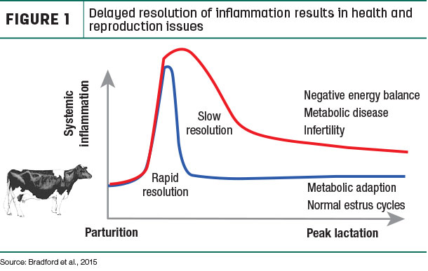 Delayed resolution of inflammation results in health and reproduction issues