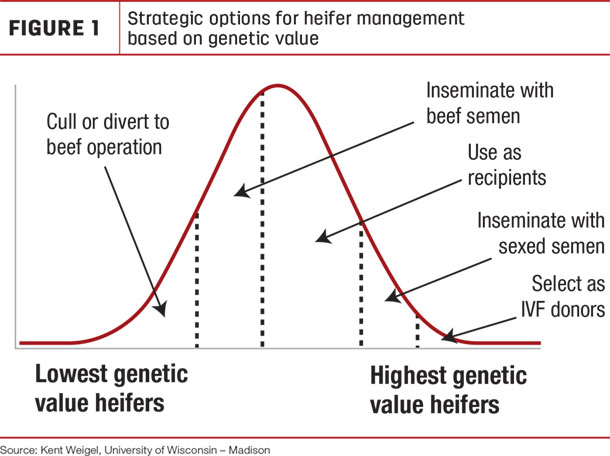 Strategic options for heifer management  based on genetic value