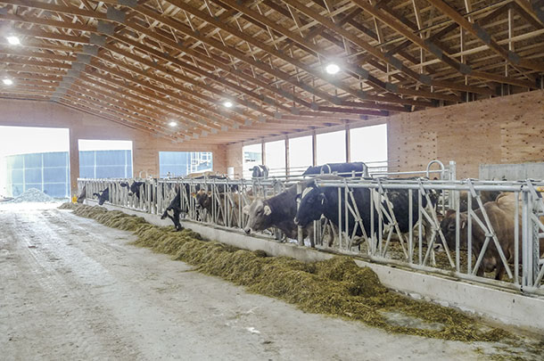 A new barn offers a large bedded-pack space