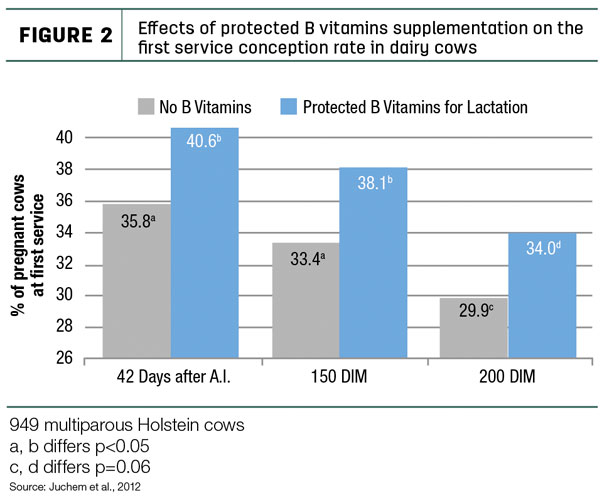 Effects of protected B vitamins supplementation on the first service conception rate in dairy cows.