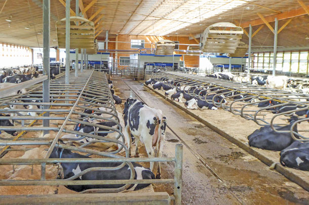 New facility for milking herd