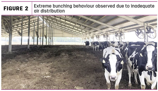 Extreme bunching behaviour ovserved due to inadequate air distribution