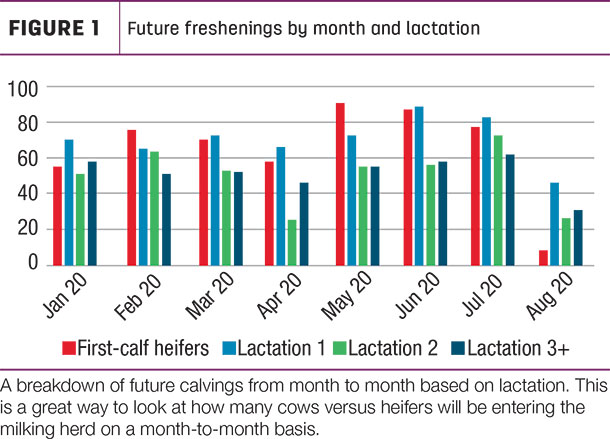 Future freshenings by month and lactation
