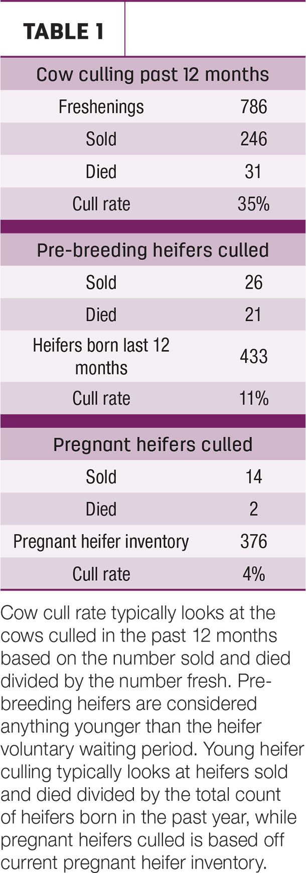 Cow culling past 12 months